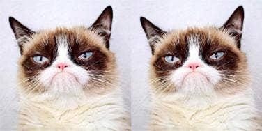 How Did Grumpy Cat Die? New Details On The Tragic Death Of The Feline Internet Sensation