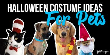 dog halloween costumes for cats
