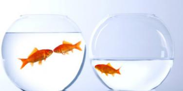 goldfish jealousy