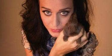 Katy Perry bunny