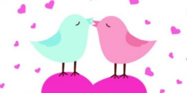 kiss birds
