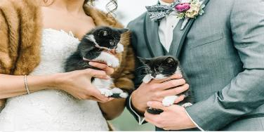 Two Rescue Kittens Make A Guest Appearance At This Couple's Wedding & It's So Cute!