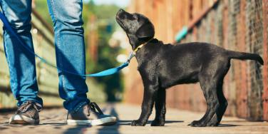 "Why ""Puppy Training"" Your Man Is A Smart Idea (Says A Man)"