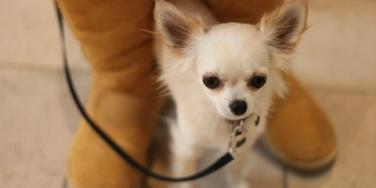 Dealing With Anxiety: How Pets Brighten Thanksgivukkah