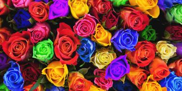bunch of different colored roses