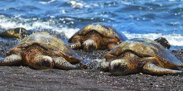 Sea turtles washed up on the beach
