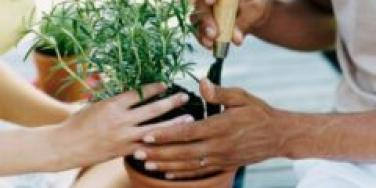 planting a tree in a pot
