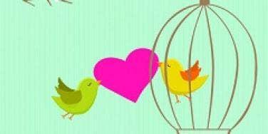 twitter birds in love
