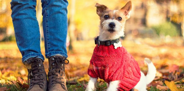 12 Dog Sweaters, Coats & Jackets To Keep Your Pup Warm All Winter