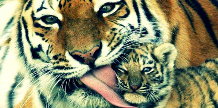 Adorable Animal Parenting Moments