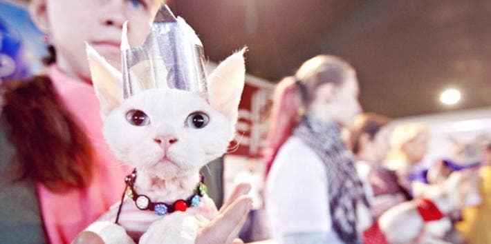 Cat Halloween Costume
