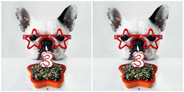 10 Best Dog Safe Birthday Cakes In 2018