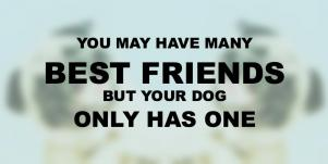 Dogs Are A Girl's Best Friend Quotes