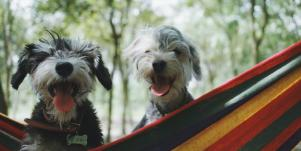 50 Pawesome Dog Instagram Captions For Pics Of Your Pup