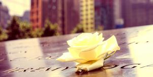 white rose placed on name in black granite at NYC's 9/11 memorial