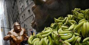 Pile Of Bananas Under Charging Bull Statue And Harambe Statue