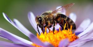 Dreaming Of Bees — Bee Symbolism, Totem & Power Animal Meaning