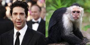 Was David Schwimmer Really 'Jealous' Of Marcel The Monkey