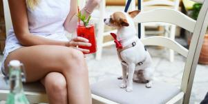 8 Human Foods That Are Safe For Dogs And 8 Foods Dogs Shouldn't Eat