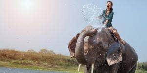 Elephant Spirit Animal Meaning & Symbolism