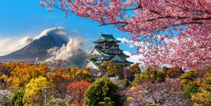 japan cherry blossoms with mount fuji