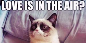 Who Is Grumpy Cat? 21 Grumpy Cat Memes And Quotes About Love & Life