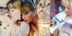 Taylor Swift's cats Meredith Grey, Olivia Benson, Benjamin Button