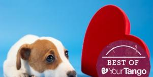Is Your Dog A Matchmaker Or A Deal Breaker?